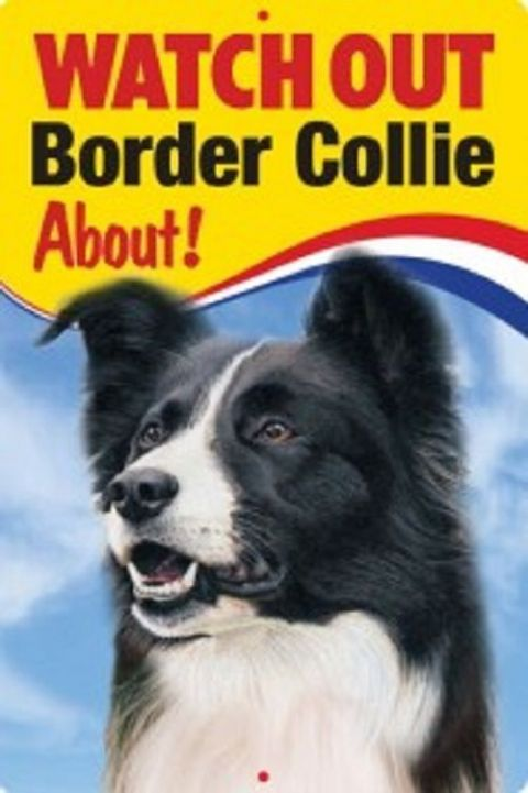 BORDER COLLIE 3D  DOG SIGN